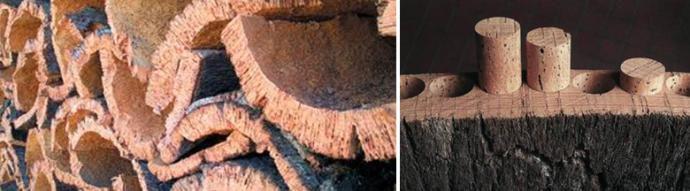 Натуральные пробки изготавливают из коры пробкового дуба
