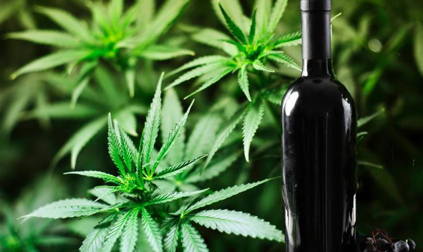Долгопрудный марихуана подмосковье где растет конопля