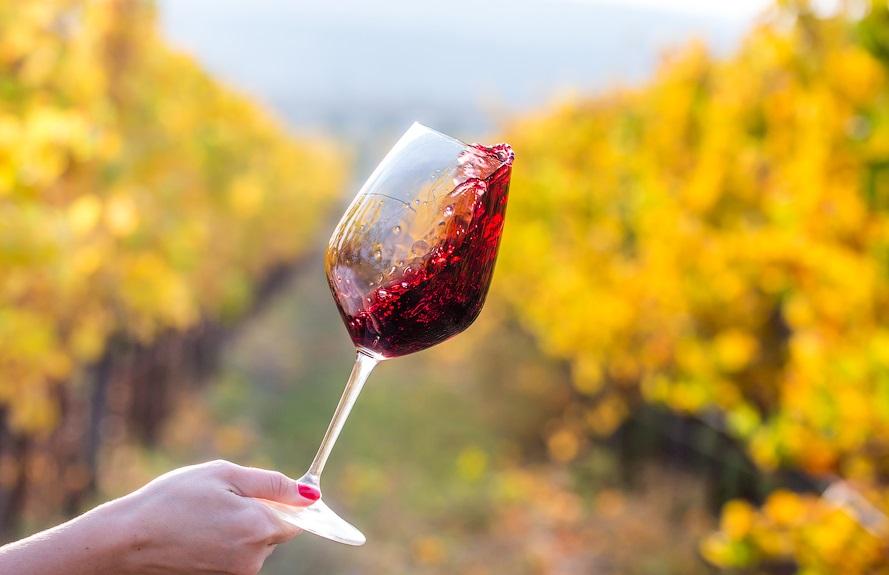 изучение вина