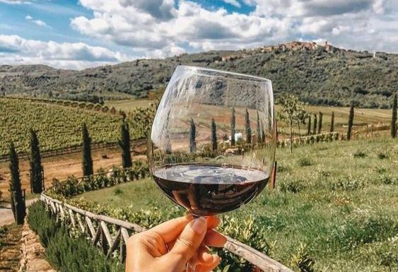 вино виноградник