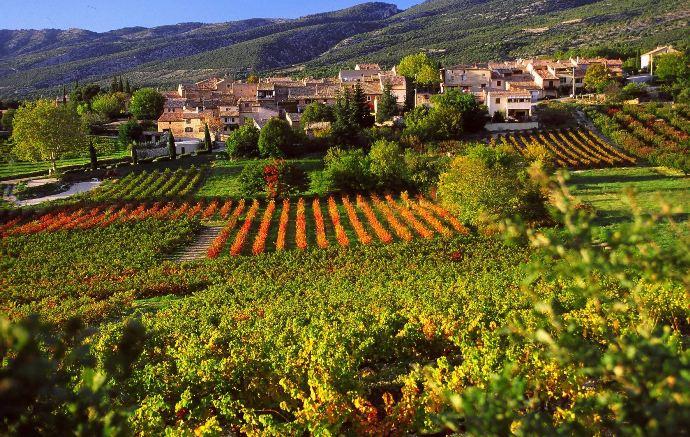 Знаменитые виноградники и провинции  мира #Aliantavin